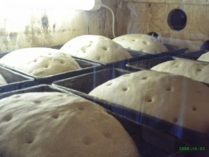bread rising in the warming closet