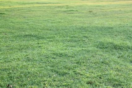 green_grass_background_210335 GREENEST flat grass