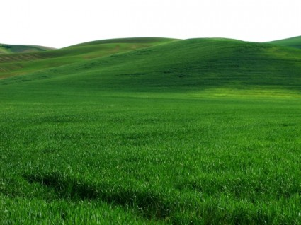 vast_expanse_of_green_grass_hd_picture_166021 GREENEST