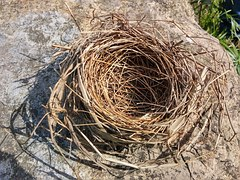 BIRD nest no eggs