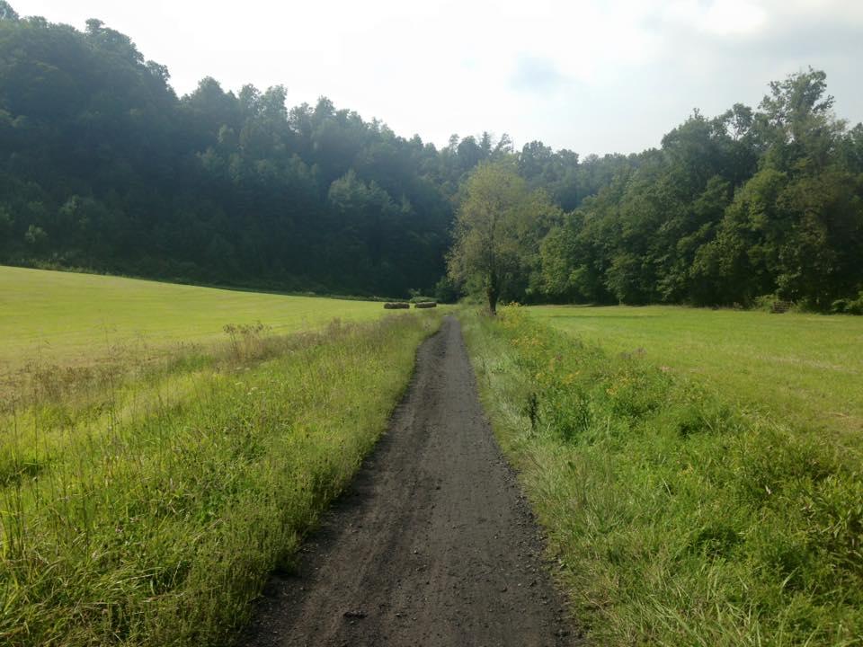 creeper field