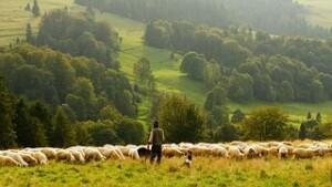 world sheep farmer