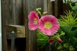 fidelity wood pink flower