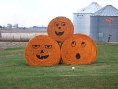 pumpkin hay bales