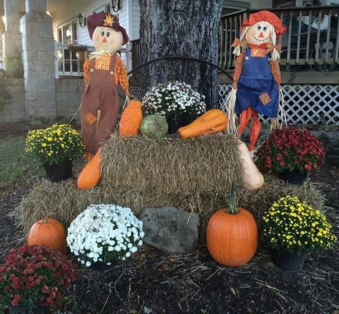 pumpkins front yard 2