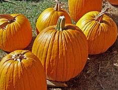 pumpkins large 2