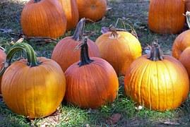 pumpkins large