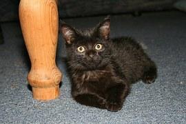 cat black in house