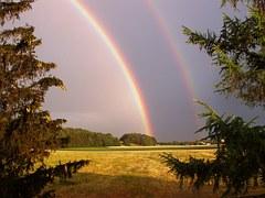 cat double rainbow