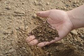 cat soil hand