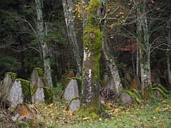 pilgrim old cemetery