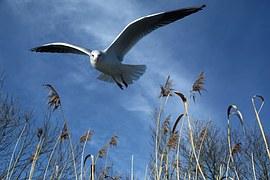 bank seagull
