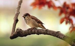 choose-response-bird