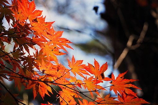pocket-leaves