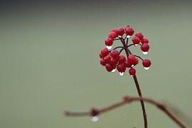 sweet-eternal-quality-red-flower-water-drops