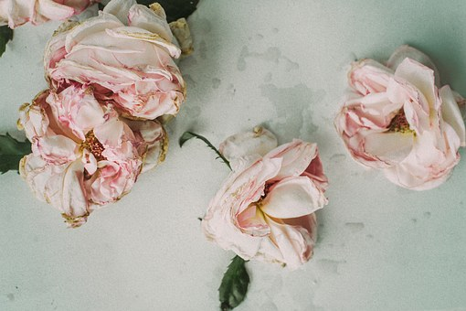 LIke wilted flowers, affairs will destroy relationships.