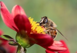finding nectar is like finding the will of God