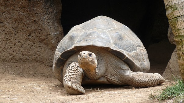 the tortoise is a winner every time