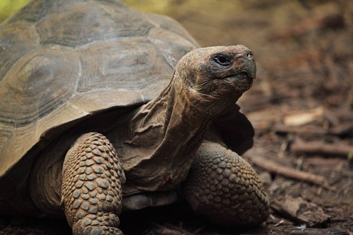 I'd rather be a tortoise than a hare
