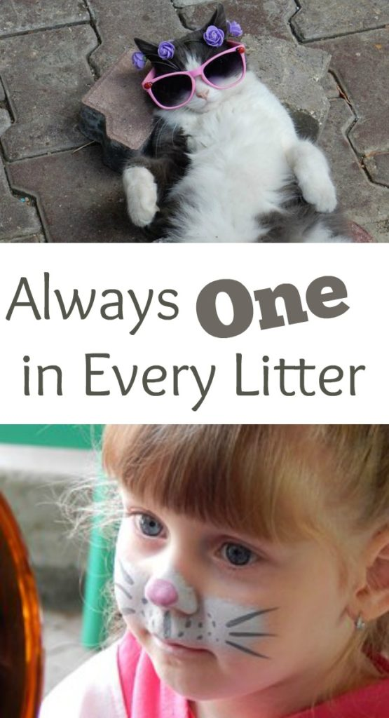 Pinterest always one in every litter