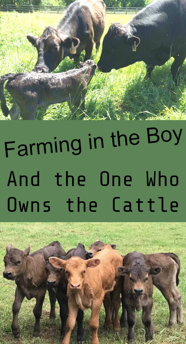 Pinterest Farming in the Boy