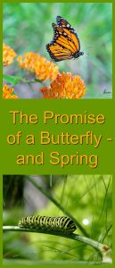 butterfly promise
